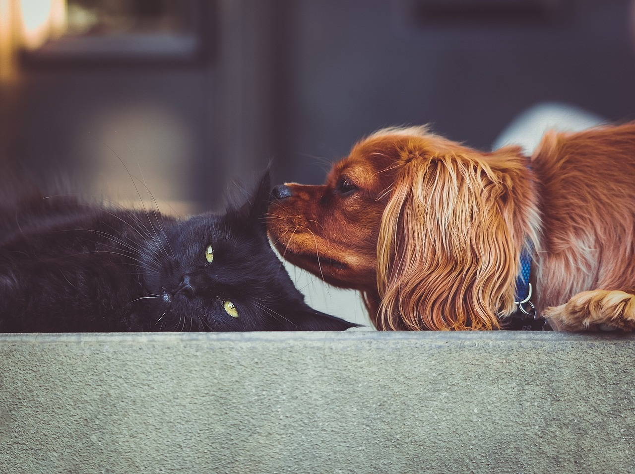 kot i pies - co można im dac do jedzenia
